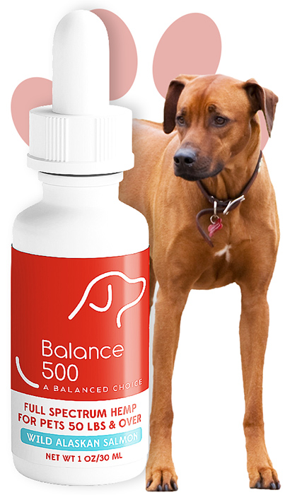 Balance 50 CBD Oil for Dogs